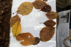 Herbst_010