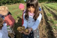 09_2020_Kartoffelnsammeln_Achim_020