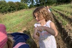 09_2020_Kartoffelnsammeln_Achim_028