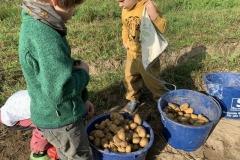 09_2020_Kartoffelnsammeln_Achim_034