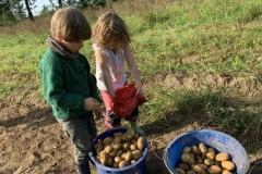 09_2020_Kartoffelnsammeln_Achim_035