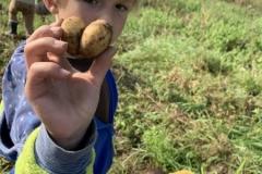 09_2020_Kartoffelnsammeln_Achim_037